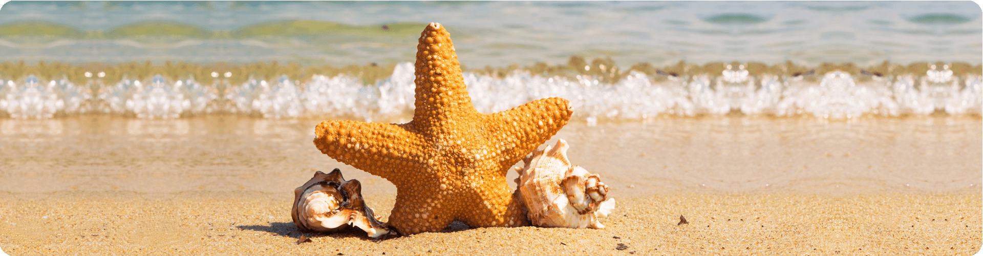 starfish and shells on a beach